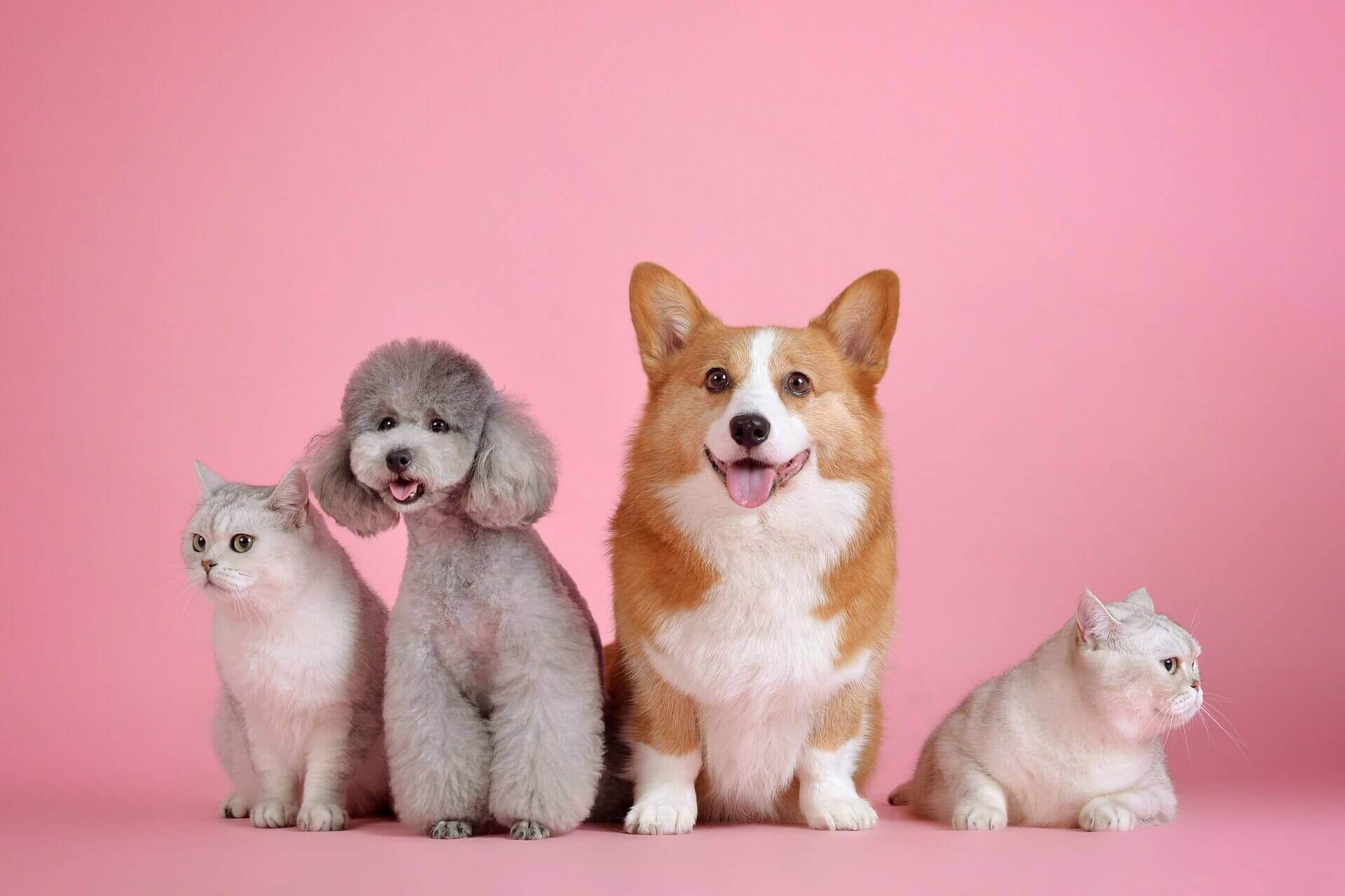 可愛い猫や犬