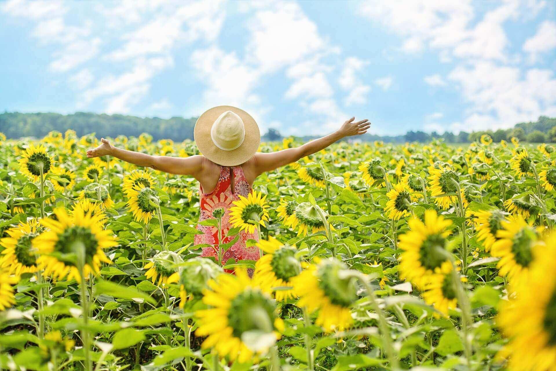 夏のひまわり畑と女性